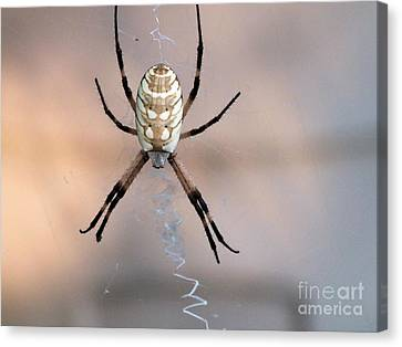Arachnid Canvas Print by Tammy Herrin