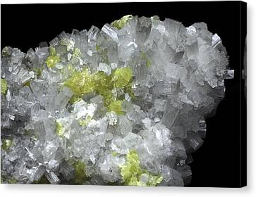 Aragonite Crystals With Sulphur Canvas Print by Dirk Wiersma