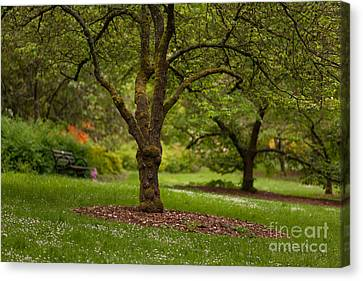 Arboretum Grove Canvas Print by Mike Reid