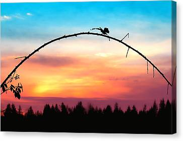 Arch Silhouette Framing Sunset Canvas Print by Tracie Kaska