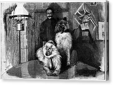 Husky Canvas Print - Arctic Explorer And Dogs, 19th Century by