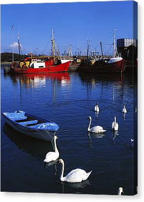 Ardglass, Co Down, Ireland Swans Near Canvas Print by The Irish Image Collection