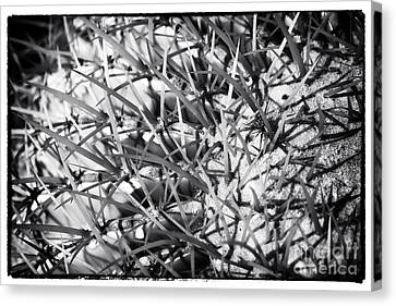 Web Gallery Canvas Print - Arizona Web by John Rizzuto