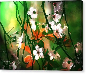 Armonia En La Naturaleza Canvas Print