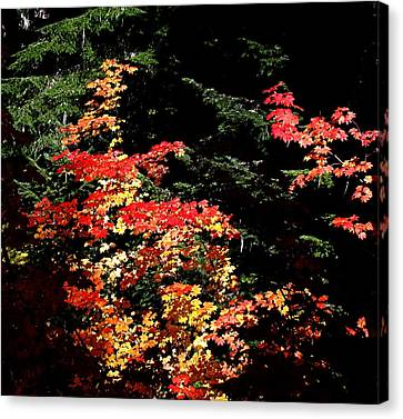 Canvas Print featuring the photograph Arrival Of Autumn by Nick Kloepping