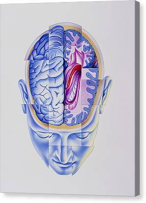 Art Of Abstract Head Showing Brain Limbic System Canvas Print by John Bavosi