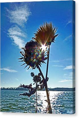 Canvas Print featuring the photograph Artichoke Bones by William Fields