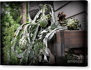 Canvas Print featuring the photograph Artichoke by Tanya  Searcy