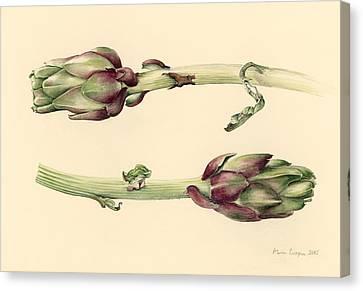 Artichokes Canvas Print by Alison Cooper