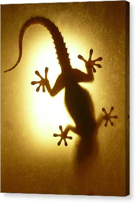 Artistic Backlight Shot Of A Gecko, Nicely Shaped. Canvas Print by Sir Francis Canker Photography