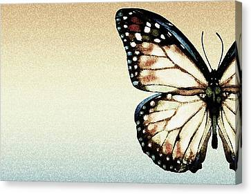 Computer Graphics Canvas Print - Artistic Butterfly by Chris Knorr