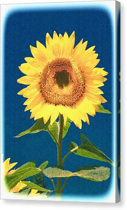 Canvas Print featuring the photograph Artsy Sunflower by Nancy De Flon