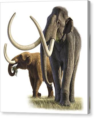 Artwork Of A Mammoth And A Mastodon Canvas Print by Raul Martin