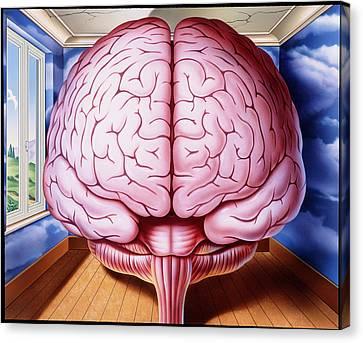 Artwork Of Human Brain Enclosed In Dream-like Room Canvas Print by John Bavosi