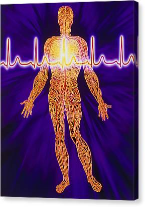 Artwork Of Human Venous System And Ecg Heart Trace Canvas Print by Mehau Kulyk