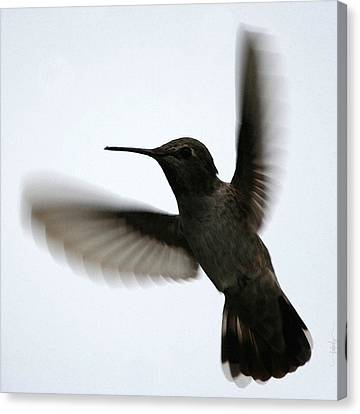 Canvas Print featuring the digital art As She Flies by Holly Ethan