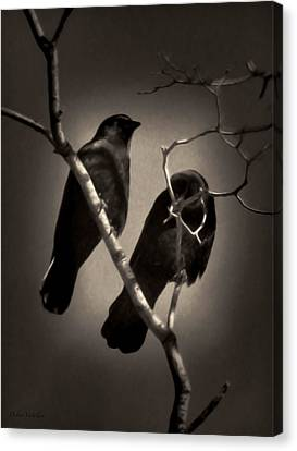 As The Crows Fly Canvas Print by Debra     Vatalaro