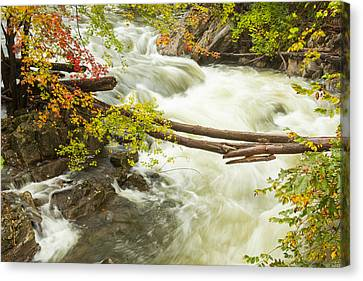 As The River Flows Canvas Print by Karol Livote