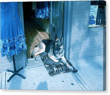 Canvas Print featuring the photograph Asheville Dog by Victoria Lakes
