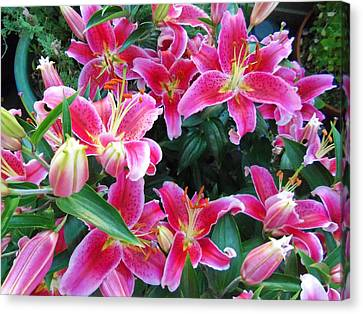 Day Lilly Canvas Print - Asiatic Lillies by Randall Weidner