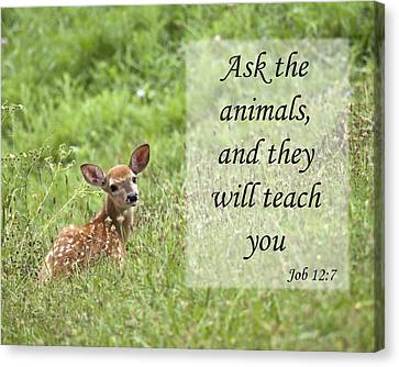 Canvas Print featuring the photograph Ask The Animals by Jeannette Hunt