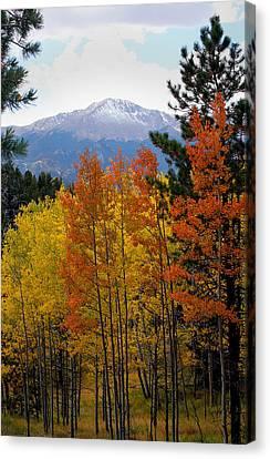 Aspen Grove And Pikes Peak Canvas Print by Kimberlee Fiedler