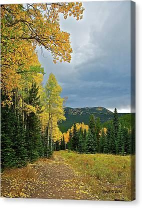 Aspen Pathway Canvas Print by Stephen  Johnson