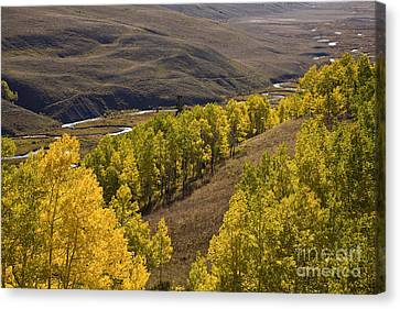 Aspen Valley Canvas Print by Timothy Johnson