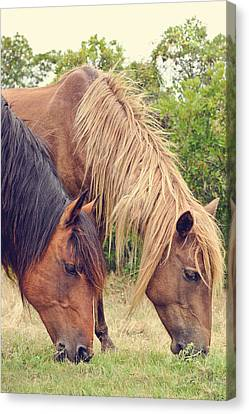 Assateague Ponies Canvas Print