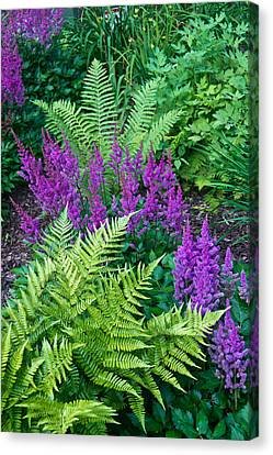 Astilbe And Ferns Canvas Print