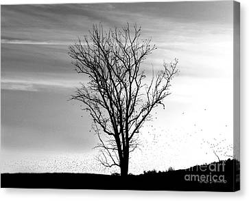 At End Of Day I  Canvas Print by Rhonda Strickland