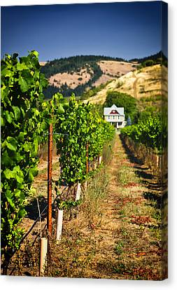 At Home On The Vineyard Canvas Print by Vicki Jauron