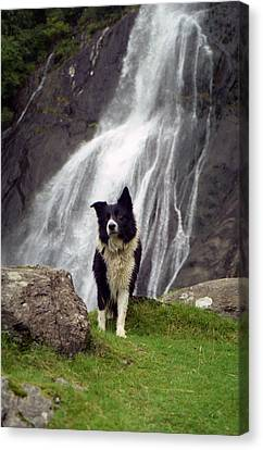 At The Falls With Indy Canvas Print by Michael Haslam