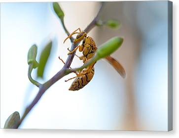 At Work. Busy Bee Canvas Print by Jenny Rainbow