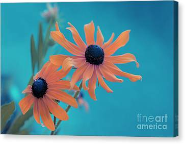 Attachement - S02cz Canvas Print by Variance Collections