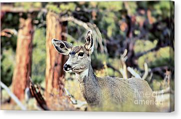 Attentive Canvas Print by Catherine Fenner