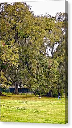 Audubon Park 2 Canvas Print by Steve Harrington