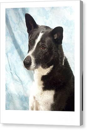 Australian Cattle Dog 103 Canvas Print by Larry Matthews