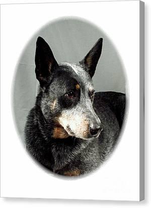 Australian Cattle Dog 363 Canvas Print by Larry Matthews