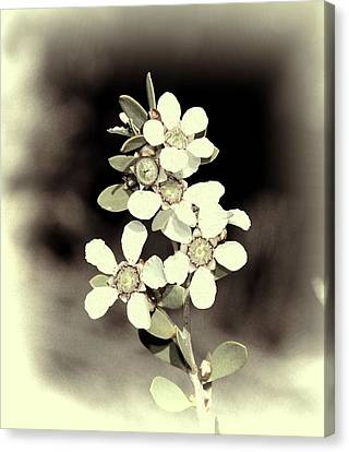 Australian Coastal Wildflowers Canvas Print