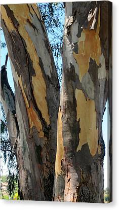 Canvas Print featuring the photograph Australian Tree by Roberto Gagliardi