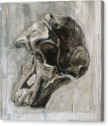 Australopithecus Africanus Skull Canvas Print by Kennis And Kennismsf