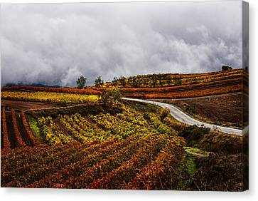 Autum Lines Canvas Print by Pasotraspaso.  Jesus Solana