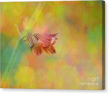 Autumn . . . Gently Canvas Print by Judi Bagwell