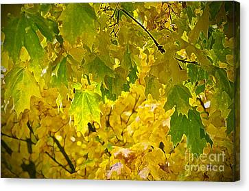 Autumn - Mellow Time Canvas Print by Gwyn Newcombe