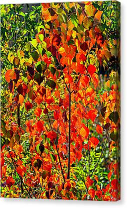 Autumn Angels..... Canvas Print by Tanya Tanski