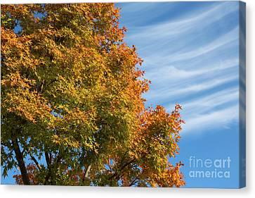 Beautiful Autumn Day Canvas Print - Autumn Anticipation by Carol Groenen