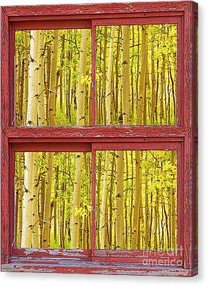 Autumn Aspen Trees Red Rustic Picture Window Frame Photos Fine A Canvas Print by James BO  Insogna