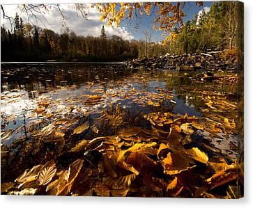 Autumn At Ragged Falls Canvas Print