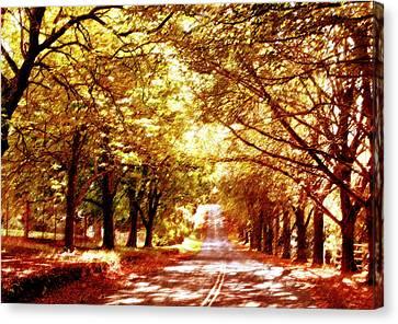 Dappled Light Canvas Print - Autumn Avenue by Linde Townsend